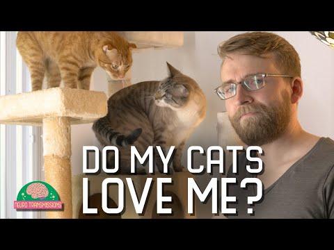 A Fascinating Experiment in Cat Attachment