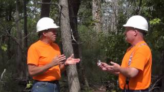 How Should I Maintain My Bat House - with Jim Kennedy