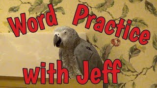 Einstein Parrot teases Jeff during a game of word practice