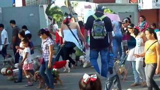 preview picture of video 'PATAS EN MARCHA 2012 ADOPTA CUNDUACAN'