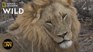 Safari Live - Day 245 | Nat Geo WILD