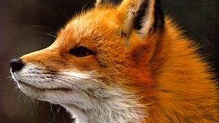 Ylvis - The Fox  What Does The Fox Say?   S