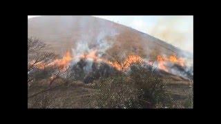 静岡県伊東市★伊豆の観光スポット「大室山」で毎年行われる「山焼き」を見てきました