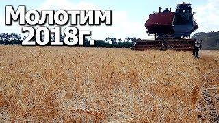 Начали молотить пшеницу  Нива СК-5 #Сельхозтехника ТВ