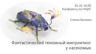 """Степан Белякин """"Фантастический геномный импринтинг у насекомых"""""""