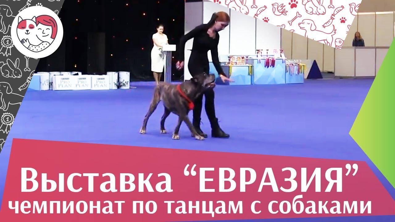 Чемпионат РКФ по танцам с собаками 10 на Евразии 17 ilikepet