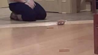 Zhu Zhu Pet Mr. Squiggles in action! - Video Youtube