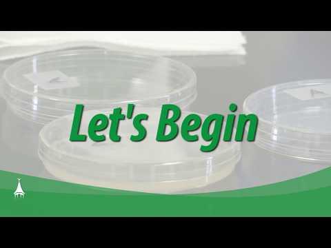 Megoldás a genitális szemölcsök kauterizálására