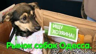 Рынок собак. Market of dogs. Одесса. Староконный рынок. Puppy. Щенок. VLOG DOG. Птичий рынок.