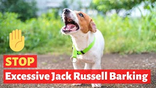 How To Stop Excessive Barking Behavior Of A Jack Russell Terrier Dog?