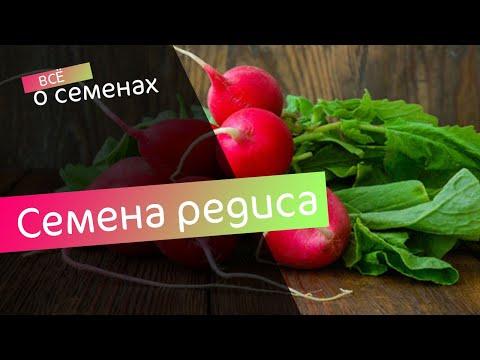 📹 Обзор семян редиса на 2019 год ✔️ Редис для открытого грунта ✔️ В Гостях у Агронома