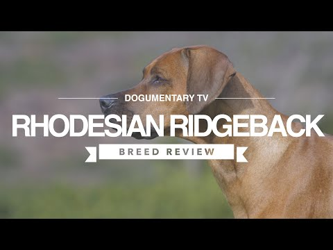 RHODESIAN RIDGEBACK BREED REVIEW