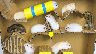 Hamsters Escape From Pool Cardboard - Three Hamsters Running In Pool Maze Making From Cardboard