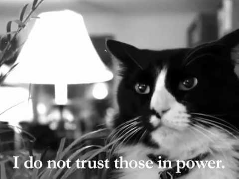 Animal Print Desktop Wallpaper Henri The Cat Makes His Political Views Known Video