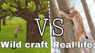 Wild craft VS Real life (by Olivka)