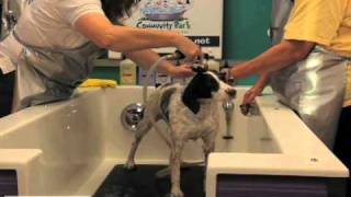 3 step dog grooming basics