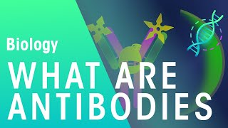 What Are Antibodies   Biology For All   FuseSchool