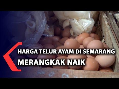 harga telur ayam di semarang merangkak naik