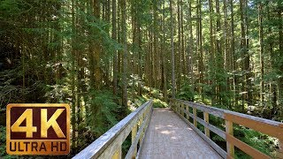 4K UHD Virtual Hike In The Forest - Middle Fork Trail, Snoqualmie | Part 2 - 3.5 HRS Piano Music