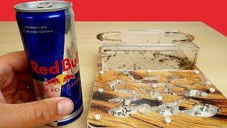 Реакция Муравьев на Молоко, Пиво и RedBull. Alex Boyko. Что если дать муравьям пиво?