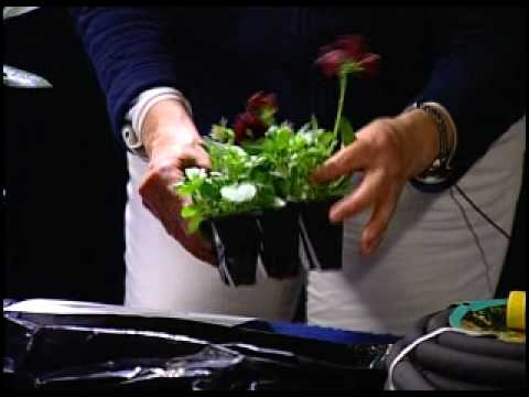 Ecological Landscaping Association - Selecting Plants