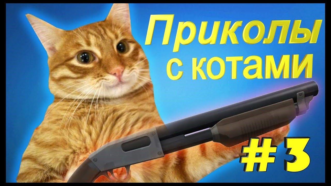 Лучшие и самые смешные приколы с котами и кошками