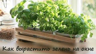Смотреть онлайн Руккола, базилик и розмарин выращиваем в квартире