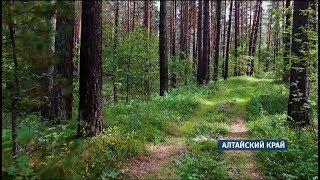 На Алтае участились случаи нападения медведей