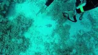 preview picture of video 'El Gouna 2014 Diving Movie'