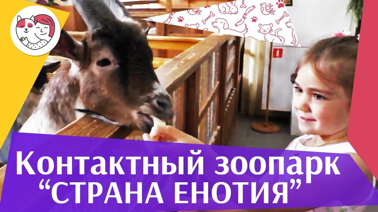 Контактный зоопарк «Страна ЕНОТиЯ» на ilikepet