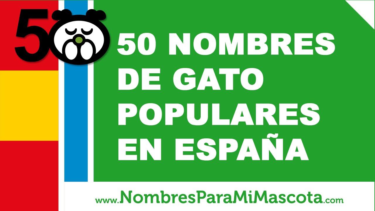 50 nombres para gatos populares en España - www.nombresparamimascota.com