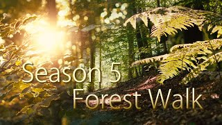 Relaxing Music | relaxdaily Season 5 - Forest Walk (calming soothing stress relief music)