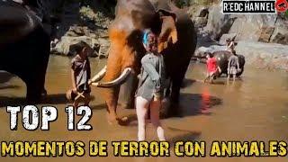 Top 12 Momentos de Terror con Animales