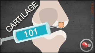 Cartilage 101 - Repair Basics Sportology
