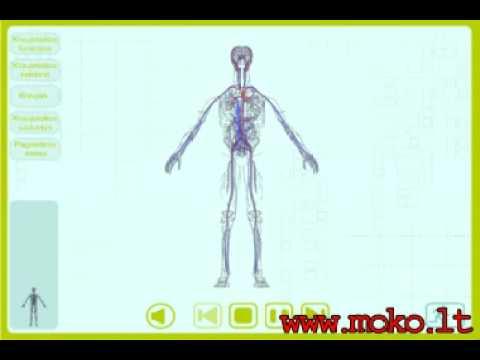 Hipertenzija 3 laipsnio