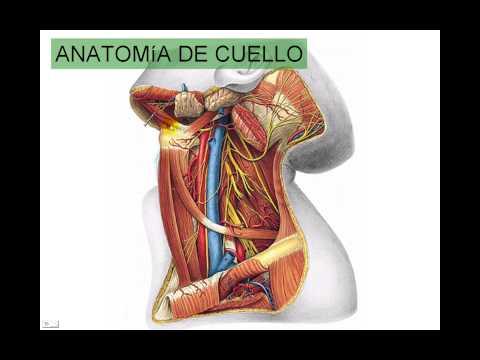 Dolore nella parte destra e posteriore
