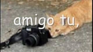 Amigos Alex Campos Portugues