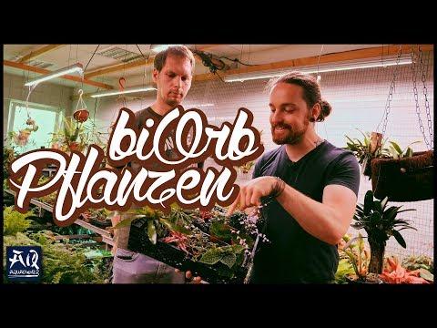 Pflanzen für das biOrb auswählen | AquaOwner