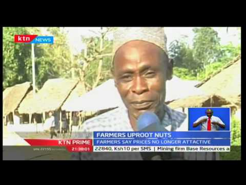 KTN Prime: Kwale farmers uproot Cashew Nuts crops dimming it worthless