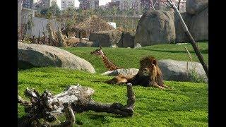 Жесть в зоопарке Сказка Ялта 4K
