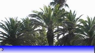 Intervento sulle palme alla villa comunale..mpg