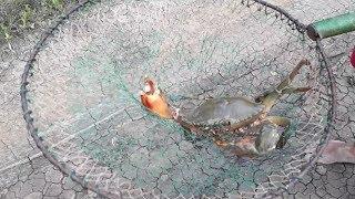 Mancing Kepiting Umpan Menggunakan Belut