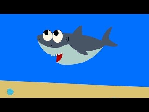 Развивающие и обучающие мультики - Акуленок (Моя Семья) теремок песенки для детей - про животных видео