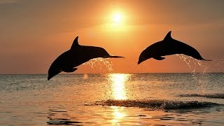 Музыка для души.Пленяющий закат! Captivating sunset!