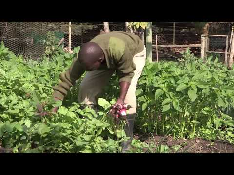 The wonderful 'farm-to-table' experience at Sirikoi Lodge - over 80 fruit, vegetables and herbs are grown in the organic garden and harvested daily by the chefs for the freshest, healthiest and most delicious meals.
