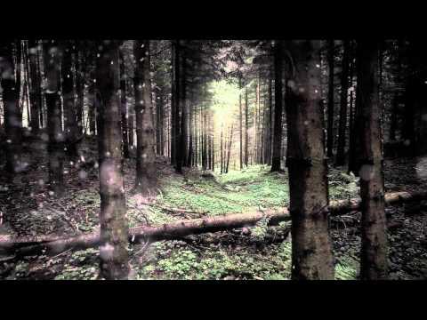 Vidéo de Torsten Pettersson