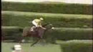 1999 Breeders' Cup Turf