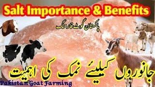 pakistan_goat_farming - मुफ्त ऑनलाइन वीडियो
