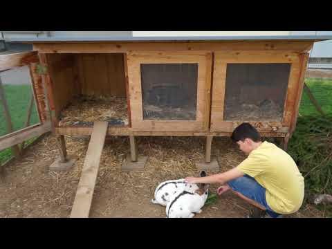 Hasen- & Meerschweinchen im Glück am Karglhof am Faaker See