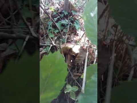 Adetto alle pulizie di leone per eliminazione di un fungo e un terriccio di spruzzi di occhiata di 4